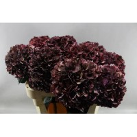 HYDRANGEA K-COLLECTION RUBY RED CLASSIC (AUBERGINE)