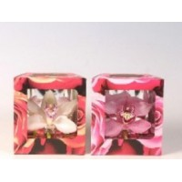 CYMBIDIUM ORCHIDS BOXED MIXED COLOR x12
