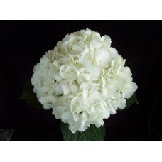 HYDRANGEA S-COLLECTION WHITE SELECT - Headsize 15-17cm