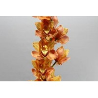 CYMBIDIUM ORCHIDS  Brown aranka, brown orange