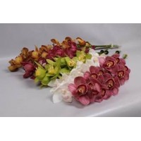 CYMBIDIUM ORCHIDS mix (different lenghts available)