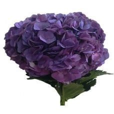 HYDRANGEA S-COLLECTION JUMBO  ROYAL PURPLE