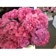 HYDRANGEA K-COLLECTION CANDY FLOSS PINK