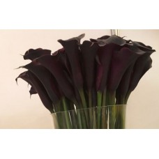 CALLA BLACK BERRY