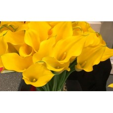 CALLA YELLOW