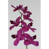 PHALAENOPSIS MONTREAUX , purple