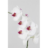PHALAENOPSIS RED LIPS, white with pink