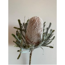 DRIED BANKSIA DYED - WHITE