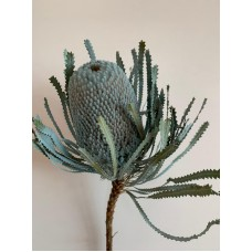DRIED BANKSIA DYED - BLUE