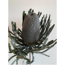 DRIED BANKSIA DYED - GREY
