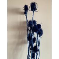 PRESERVED CARDUS - BLUE