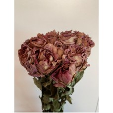 DRIED ROSES - CAFFE LATTE