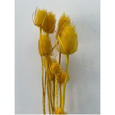 DRIED CARDUS - YELLOW