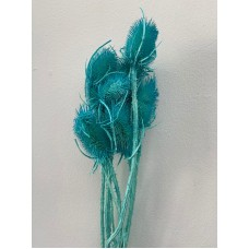 DRIED CARDUS - TURQUOISE