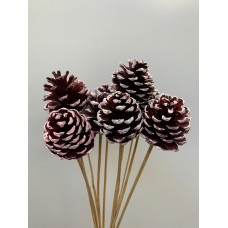 DECORATIVE CONIFER CONES - WHITE WASH