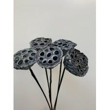 DRIED LOTUS GREY