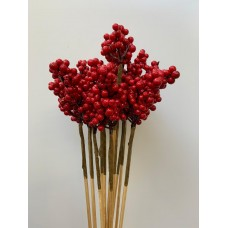 DECORATIVE ILEX - RED