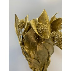 DRIED EUCALYPTHUS - GOLD