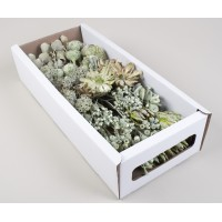 MIXED BOX GREEN 130 STEMS