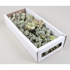 MIXED BOX GREEN 60 STEMS