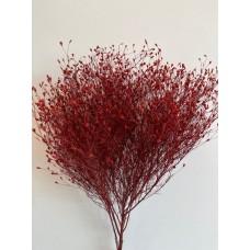 PRESERVED GYPSOPHILIA - DESERT STAR RED