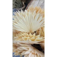 DRIED PALM SPEAR SMALL BLEACHED