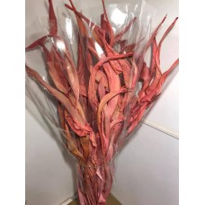 PRESERVED STRELITZIA LEAF RED