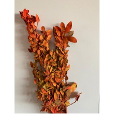 PRESERVED FALL COLOR LEAVES - PAINTED
