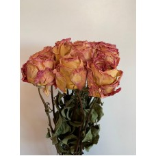 DRIED ROSES - BICOLOR