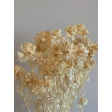 DRIED CARTHAMUS - BLEACHED