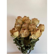DRIED ROSES - ANTIQUE YELLOW
