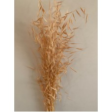 DRIED AVENA - CORAL