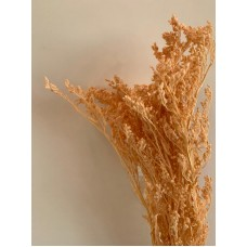 DRIED SOLIDAGO - CORAL