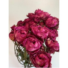 DRIED SPRAY ROSES - CERISE