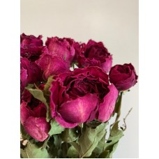 DRIED ROSES - CERISE