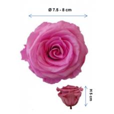 Preserved Standard Rose Head - 2XL