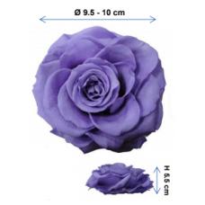 Preserved Standard Rose Head - 3XL