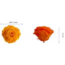 Preserved Standard Rose Head - 4XL