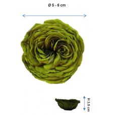 Preserved English Rose Heads - XLarge