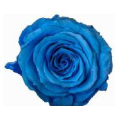 PRESERVED ANN SOPHIE ROSE HEAD - MARINA BLUE