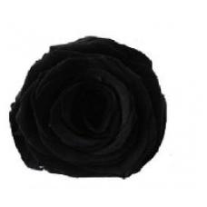PRESERVED ANN SOPHIE ROSE HEAD - NOIR