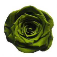 PRESERVED ANN SOPHIE ROSE HEAD - OLIVE GREEN