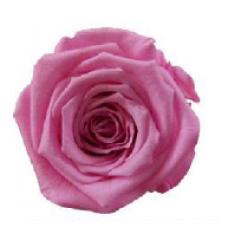PRESERVED ANN SOPHIE ROSE HEAD - PINK