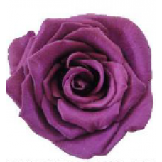 PRESERVED ANN SOPHIE ROSE HEAD - PLUM
