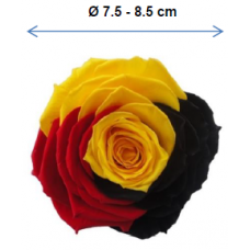 PRESERVED ANN SOPHIE MULTI-COLORED & RAINBOW ROSE HEAD