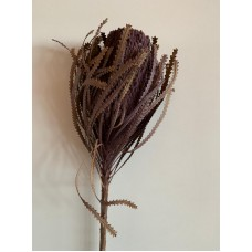 DRIED BANKSIA DYED - AUBERGINE