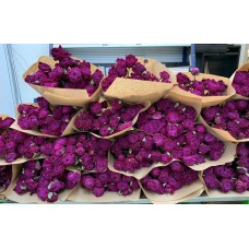 DRIED PEONY - FAITH PURPLE