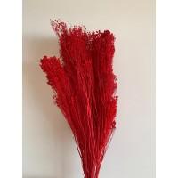 PRESERVED BROOM BLOOM - RED