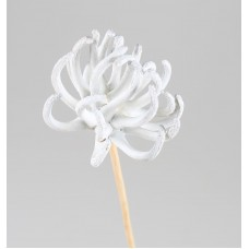 SPIDERGUM CLAWS WHITE