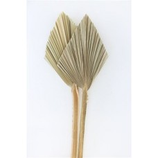 DRIED PALM SPEAR SMALL NATURAL